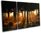 Forest Trees Landscapes TREBLE CANVAS WALL ART Picture Print VA