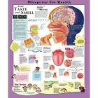 """Anatomical Chart Company Blueprint for Health Your Taste and Smell - 20"""" x 26"""""""