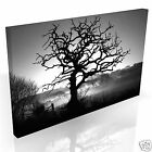 Black & White Silhouette Tree * Top Quality Box Canvas Ready to Hang * A1 A2 A3