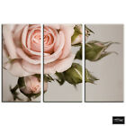 Rose shabby chic  Vintage BOX FRAMED CANVAS ART Picture HDR 280gsm