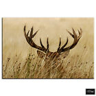Stag in Grass    Animals BOX FRAMED CANVAS ART Picture HDR 280gsm