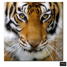 Animals Tiger Face   BOX FRAMED CANVAS ART Picture HDR 280gsm