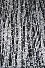 Metallic Silver Gray & Black Trees Forest Naturescape Cotton Fabric by Hoffman