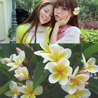 Fashion 3 Pcs Hawaiian White Plumeria Flower Foam Beach Hair Clip Balaclavas NEW