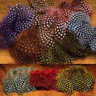 Hareline Strung Guinea Feathers Fly Tying Materials Assorted Colors