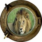 Huge 3D Porthole Lion Safari View Wall Stickers Film Mural Art Decal Wallpaper