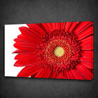 RED GERBERA FLOWER CLOSE UP BOX MOUNTED CANVAS PRINT WALL ART PICTURE PHOTO