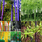 100× Black Purple Green Phyllostachys Pubescens Moso-Bamboo Seeds Plants Sanwood