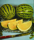 Watermelon Seed:  Yellow Doll Watermelon Seeds  Fresh Seed  FREE Shipping