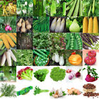 3-3000PC Wholesale Lots Vegetables Seed Vegetable Garden Courtyard Decor Seeds A