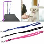 Durable Leash Pet Cat Dog Grooming Loop Cable Rope Leashes for Beauty Bathing
