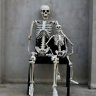 Posable Full Life Size Skeleton Halloween Party House Hunted Prop Decor Park