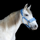 Fleece Padded Nylon Horse Halter Available in Multiple Sizes and Colors CLOSEOUT